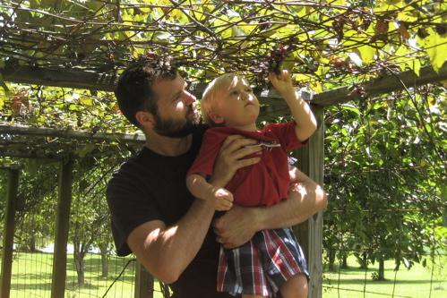 Bacchus Picking Grapes
